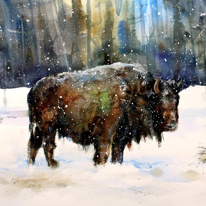 Dean Crouser картины животных акварелью 9 (700x700, 422Kb)