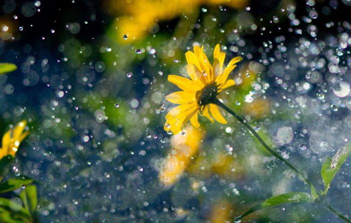 цветок под дождем/4348076_5dojd (700x445, 82Kb)