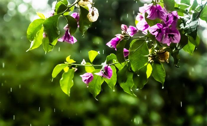 летний дождь/4348076_1dojd (700x429, 68Kb)