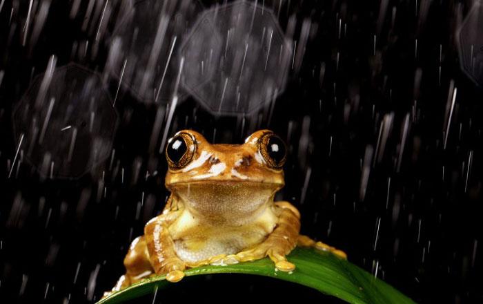 лягушка под дождем вечером/4348076_2dojd (700x440, 50Kb)