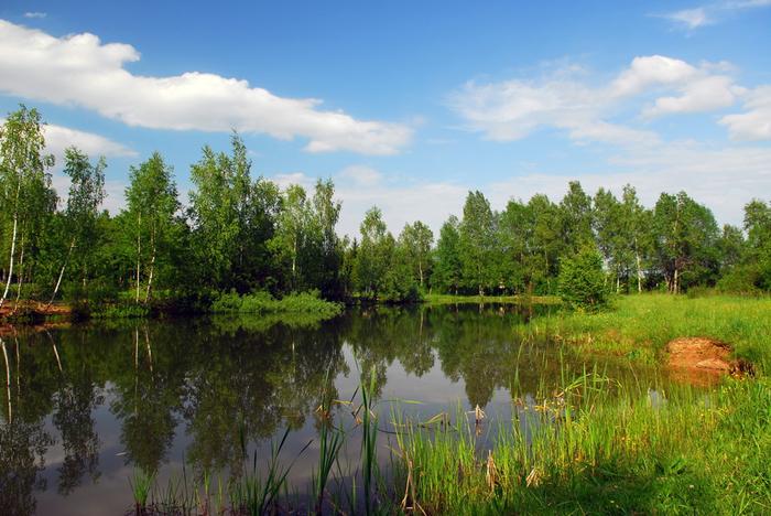 лесное озеро 1 (700x468, 441Kb)