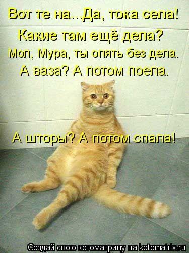 kotomatritsa_0Y (375x500, 107Kb)