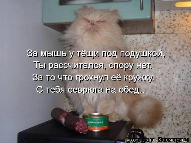 kotomatritsa_Ao (640x480, 118Kb)
