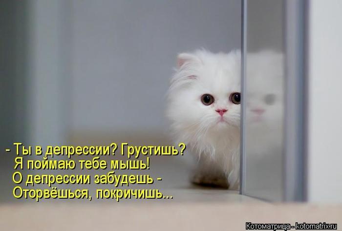 kotomatritsa_QV (700x473, 132Kb)