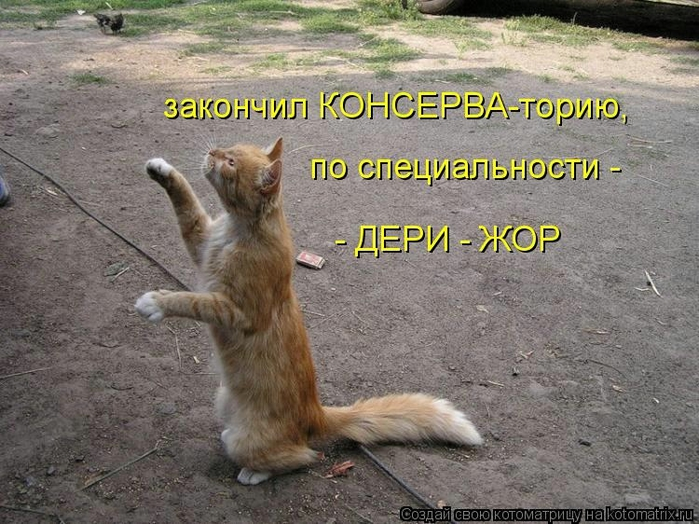 kotomatritsa_T (700x524, 304Kb)