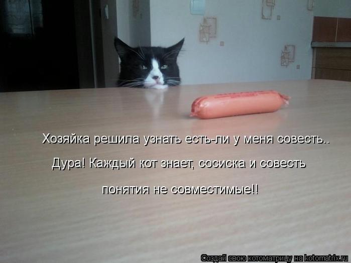 kotomatritsa_Up (700x524, 166Kb)