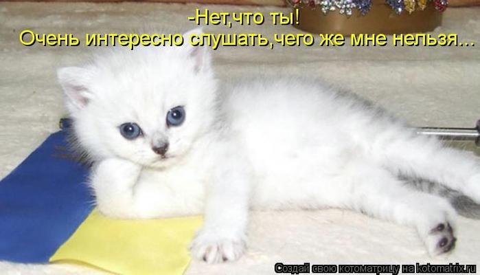 kotomatritsa_z (700x400, 152Kb)