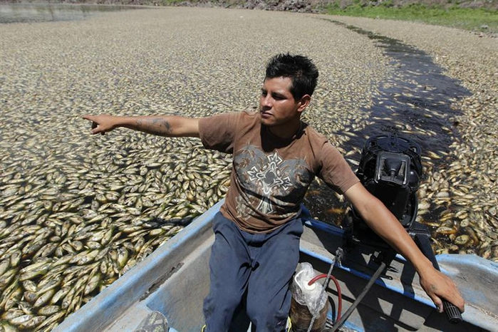 mexica fish (2) (700x466, 301Kb)
