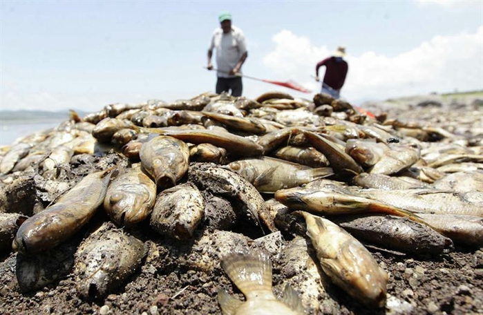 mexica fish (3) (700x456, 243Kb)