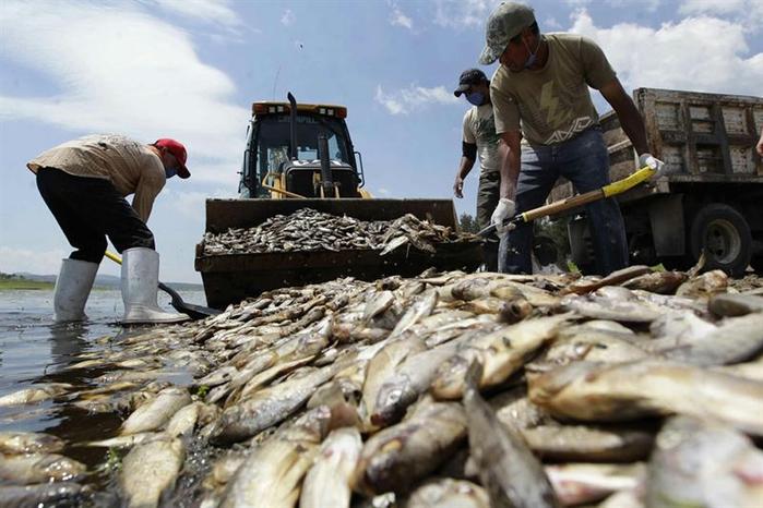 mexica fish (6) (700x466, 237Kb)