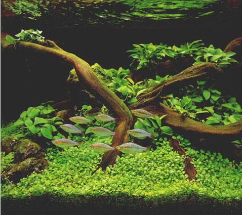 Часто, но не всегда, после помещения дерева в аквариум, появляются странные образования.