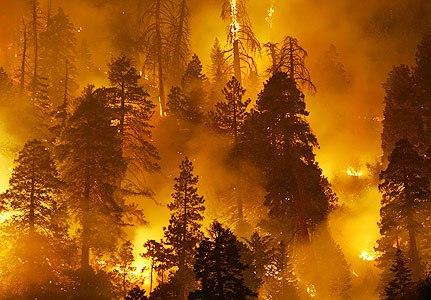 пожар (431x300, 45Kb)