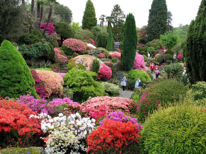 sadyi_leonardsli_leonardslee_gardens_ (700x525, 125Kb)