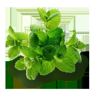 melissa-limonnaya (300x300, 120Kb)