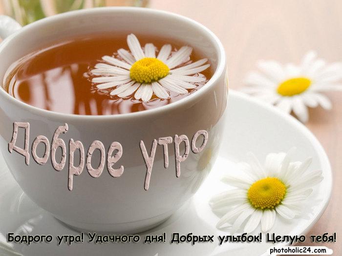 Доброе утро ромашки в чае (500x325, 70Kb)