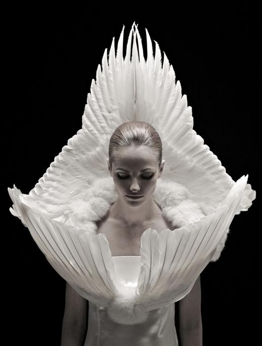 дизайнерская одежда их перьев птиц Джесс Итон 4 (530x700, 178Kb)