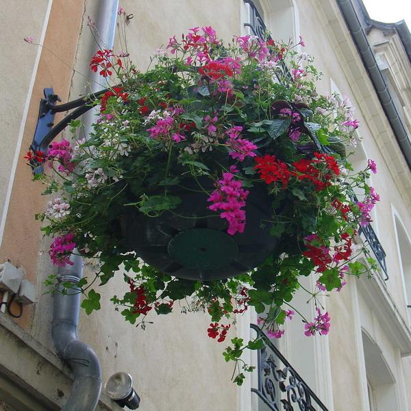 Цветы на балконе: роскошная коллекция ярких идей, часть 1. о.