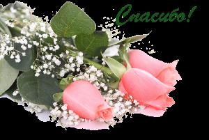 87063385_Gentile_roses__33_kopirovanie (300x201, 107Kb)
