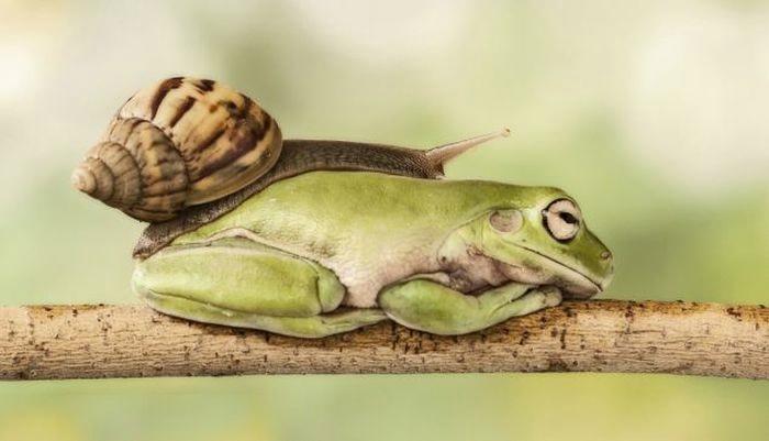 лягушка и улитка (2) (700x401, 93Kb)