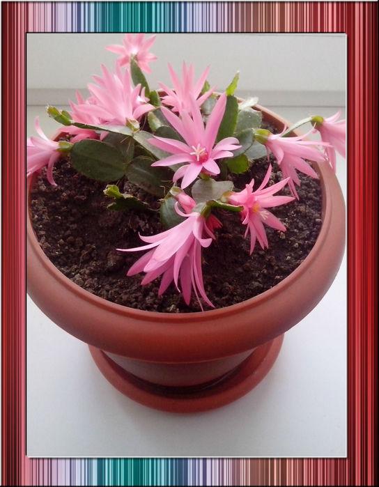 У меня расцвел  цветок (544x700, 76Kb)