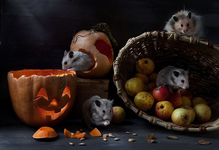 hamsters02 (700x479, 215Kb)