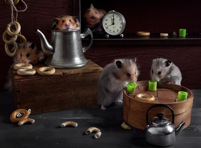 hamsters06 (700x515, 244Kb)