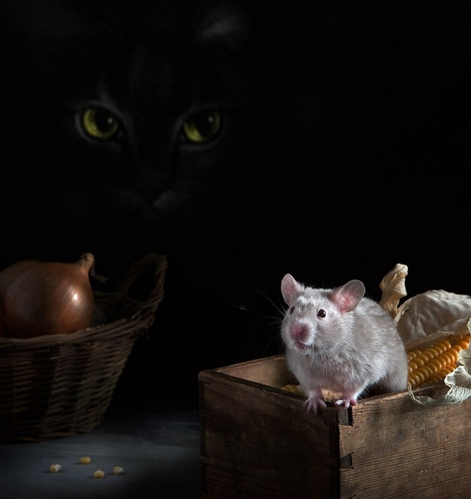 hamsters08 (660x700, 157Kb)