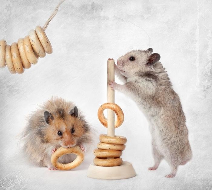 hamsters12 (700x628, 264Kb)