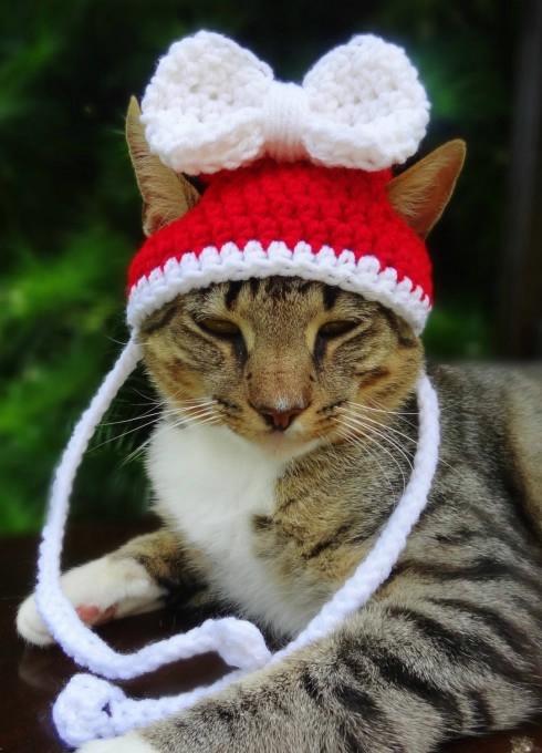 одежда для кошек фото (490x680, 162Kb)