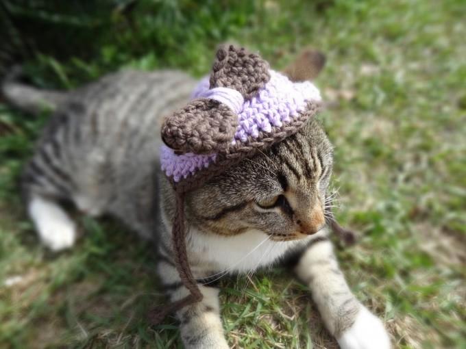 одежда для кошек фото 2 (680x510, 142Kb)