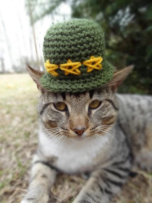 одежда для кошек фото 4 (510x680, 138Kb)