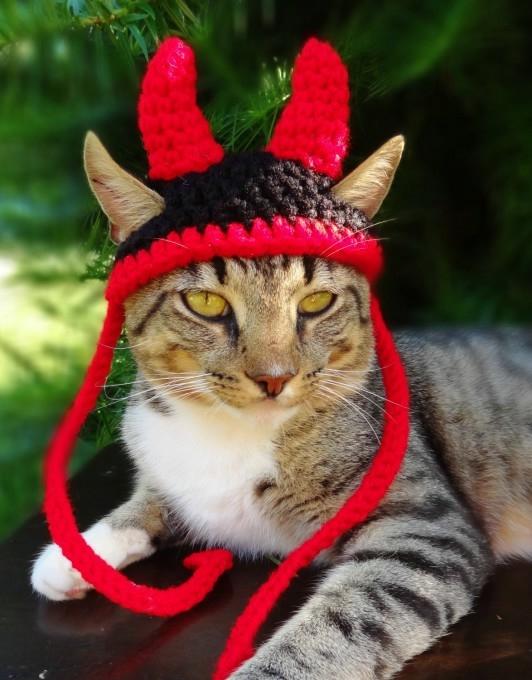 одежда для кошек фото 6 (532x680, 177Kb)