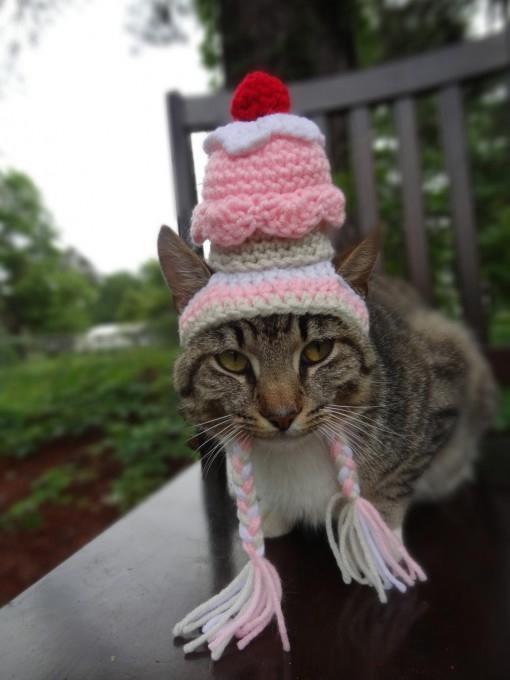 одежда для кошек фото 7 (510x680, 104Kb)