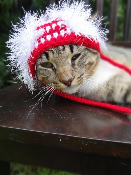 одежда для кошек фото 11 (510x680, 159Kb)