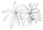 ������ 7089786-black-and-white-sketch-flower (400x283, 57Kb)