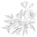 Превью 9223909-flowers-alstroemeria-vector-monochrome-contours-on-a-white-background (400x400, 83Kb)