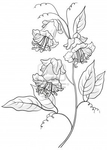 Превью 10427517-flowers-kobe-petals-and-leaves-monochrome-contours (286x400, 59Kb)
