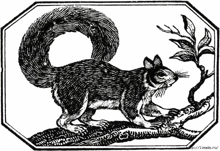 Vintage-Squirrel-Image-GraphicsFairy-1024x707 (700x483, 296Kb)