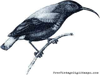 free digital stamp - sun bird image (320x243, 45Kb)