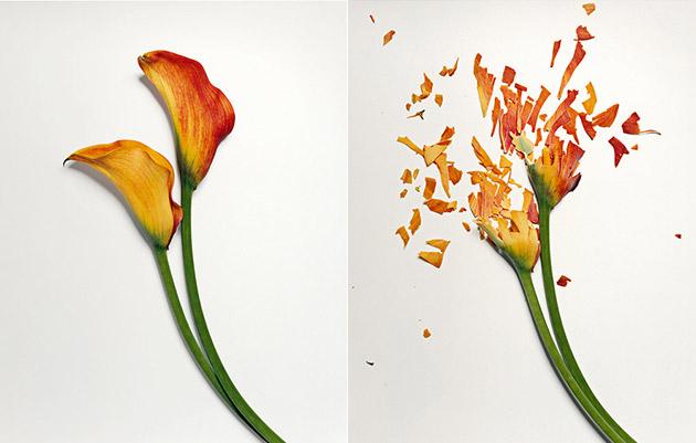 19-09-12-broken-flowers-image05 (630x401, 139Kb)