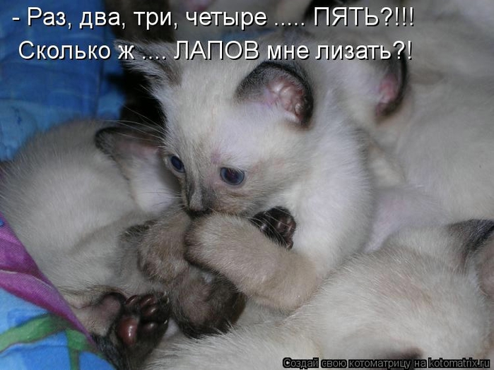 kotomatritsa_ac (700x524, 221Kb)
