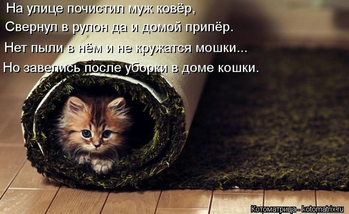 kotomatritsa_b (700x430, 212Kb)