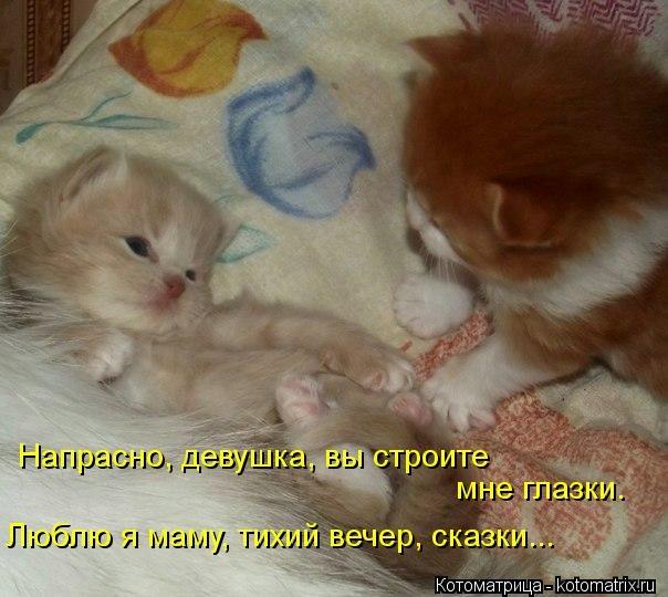 kotomatritsa_nx (604x540, 139Kb)