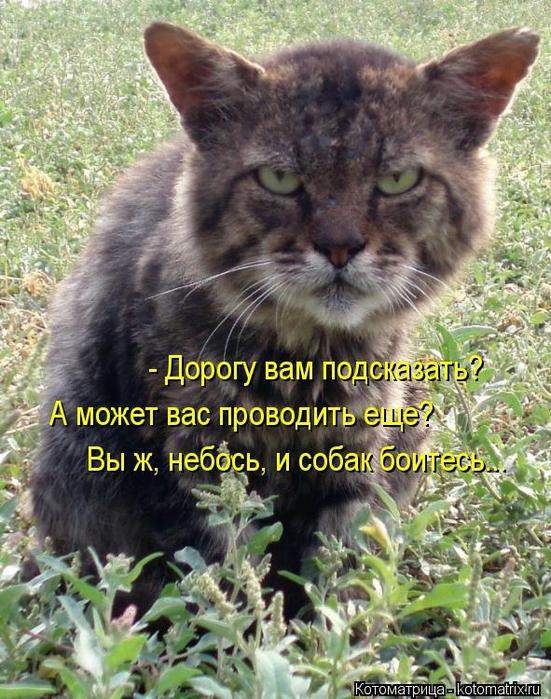 kotomatritsa_p (551x700, 342Kb)