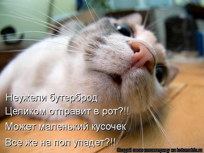 kotomatritsa_qc (700x522, 232Kb)