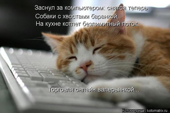 kotomatritsa_Y5 (700x466, 173Kb)
