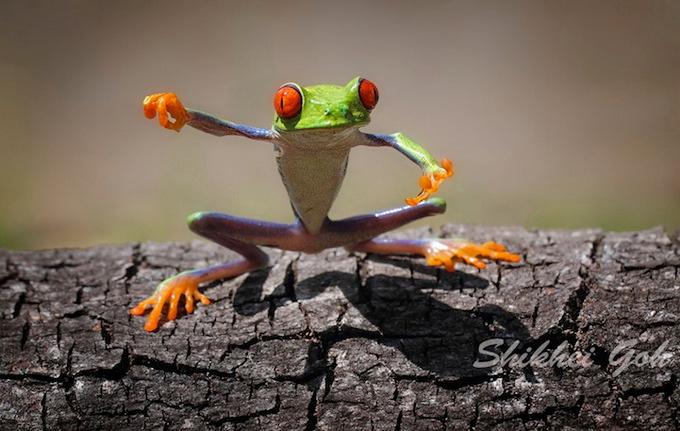 смешные лягушки фото 5 (680x431, 281Kb)