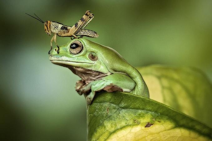 смешные лягушки фото 11 (680x454, 210Kb)