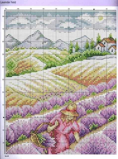 лавандовое поле. вышивка крестиком (3) (475x640, 394Kb)