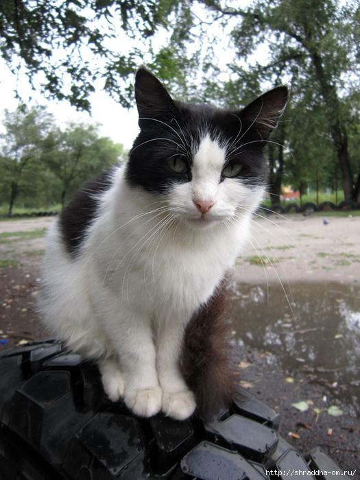 котик на шине (2) (525x700, 293Kb)